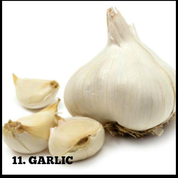 Garlic FINAL